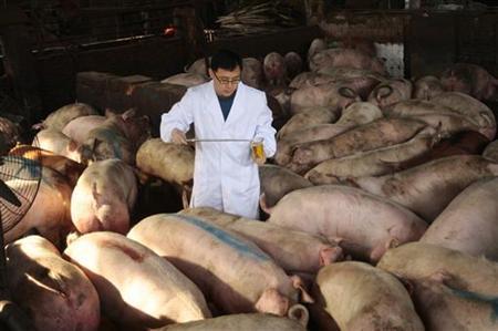 """Hé lộ """"công nghệ"""" nuôi lợn bằng thuốc kháng sinh tại Trung Quốc"""