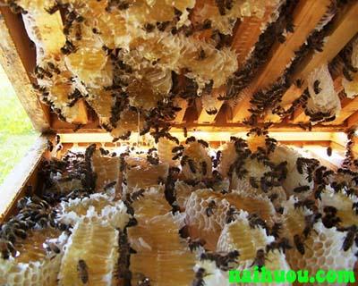 Một số bệnh thường gặp ở ong và cách điều trị