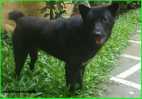 Đặc điểm sinh học của loài chó