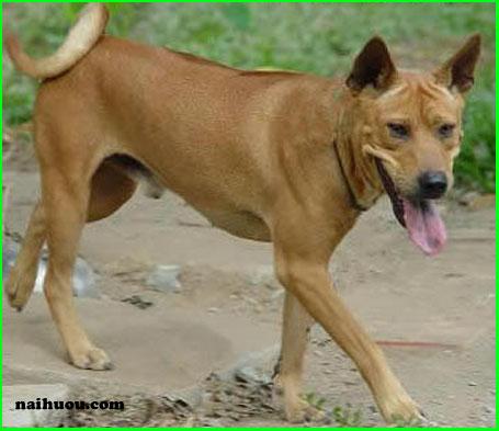 Bệnh có thể gặp khi nước tiểu của chó có máu