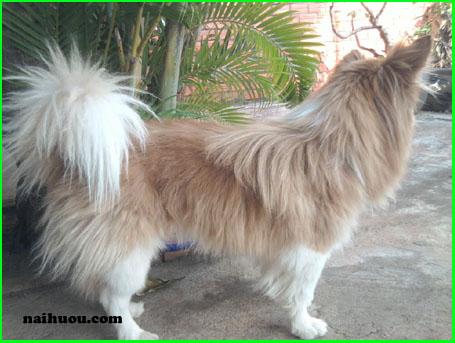 Bệnh ở chó khi có hội chứng hoàng đản