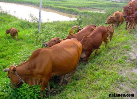 Tình hình chăn nuôi nói chung ở Việt Nam