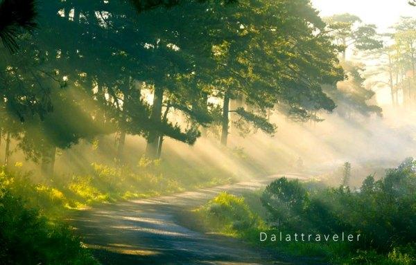 Đà Lạt tuyệt đẹp trong nắng và sương