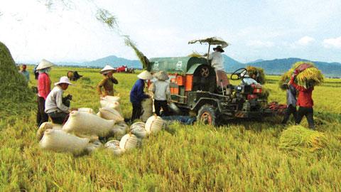 Nông dân mua ô tô được hỗ trợ 100% lãi suất
