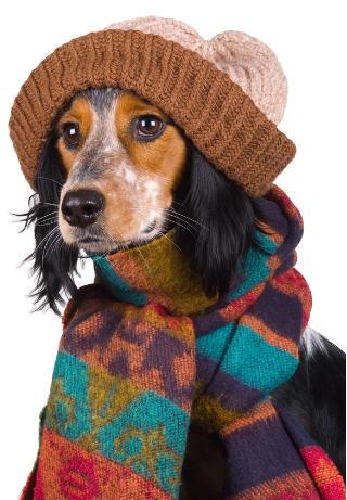 Giữ ấm cho chó trong mùa đông (Một vài mẹo nhỏ để bảo vệ chó của bạn trong những tháng mùa đông)