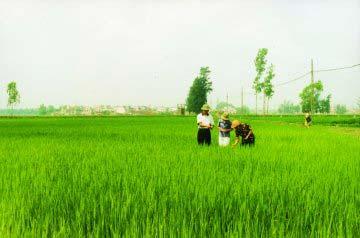Xuất khẩu gạo: