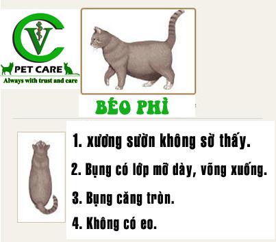 Hình ảnh so sánh mức độ gầy béo của mèo