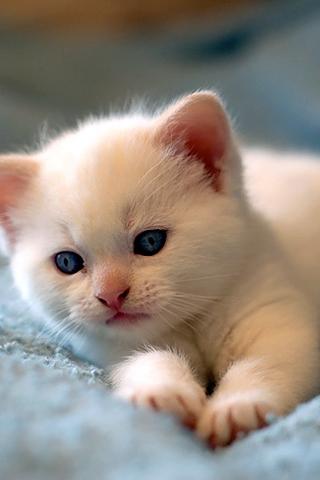 Video chăm sóc mèo con khi không có mèo mẹ