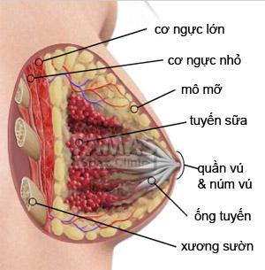 tắc tia sữa  điều trị dựa theo giải phẫu của vú