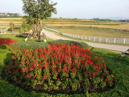 Trải nghiệm đặc sản khí Trời,tại Chiang Rai với Khangvuongbooking